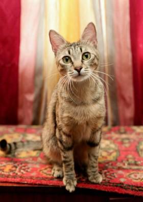 Ищет дом кошка Ета Пона