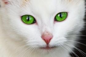 Вызов ветеринара на дом круглосуточно по Кишиневу и межгород.