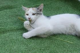 Трехцветная кошка - мышеловка, на счастье