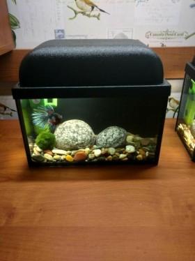 Новый настольный аквариум с рыбкой