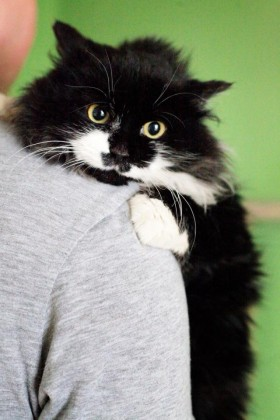Доставка кота в Питер