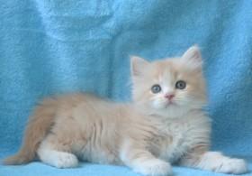 Бисквитный котик
