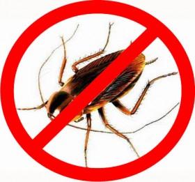 Уничтожение тараканов,клопов, блох