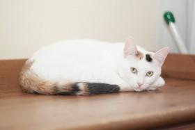 Ищет дом кошка Белка