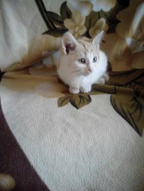 Очаровательный котенок ищет семью