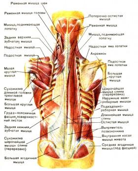Ортопедический стул-тренажер..Scaun ortopedic