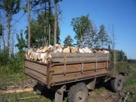 Дрова пиленые сухие с доставкой