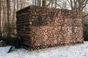 Вяз дрова с доставкой