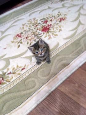 Котята.просто котята.
