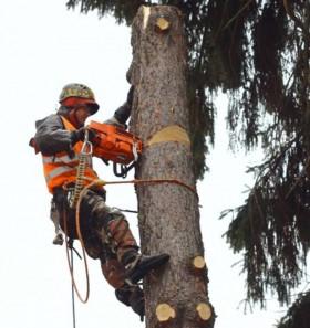 Спил деревьев,корчевание пней