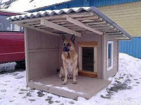 Продаю щенка немецкои овчарки