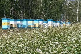 Мёд майский, пыльца на 2019 Пасека Дубских