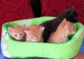 Милые котята ждут заботливых хозяев из Волжского