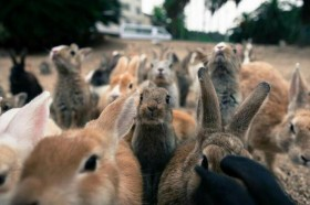 Крольчата на докорм