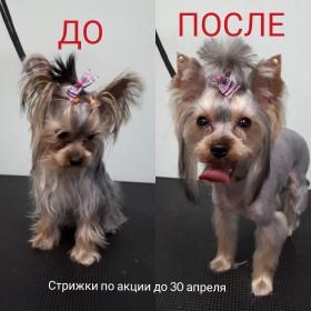 Груминг Волгоград