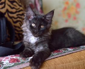 Котятки с кисточками на ушках