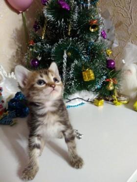 Волшебный котенок!!!