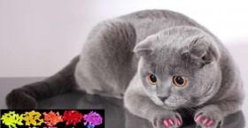 Маникюр для кошек - средство от царапанья мебели)