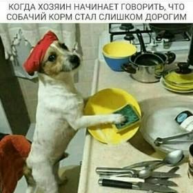 Продажа зоотоваров для домашних животных  Показать номер