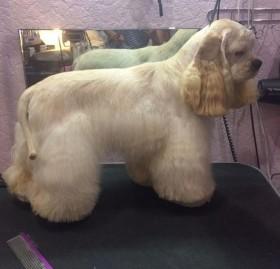 Груминг стрижка собак