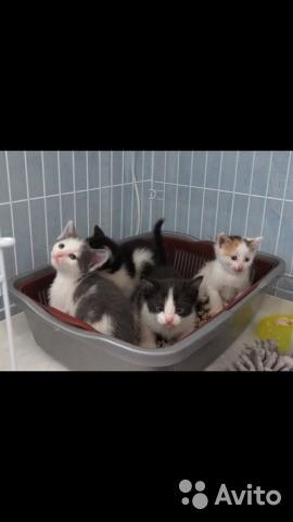 Котята на любой вкус и цвет
