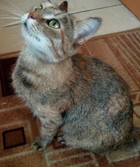 Молоденькая кошка ждет хозяина и дом!!!