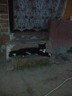 Пропал кот
