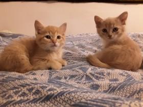 рыжие котятки в поисках заботливого хозяина