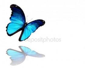 Привезем вам бабочек