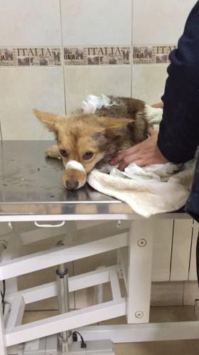 Помогите спасти собачку