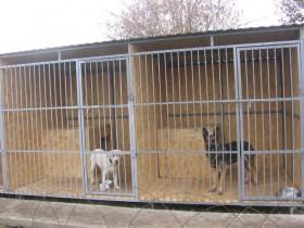 Передержка собак (Зоогостиница) в Воронеже