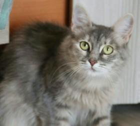 Кошка Эшли