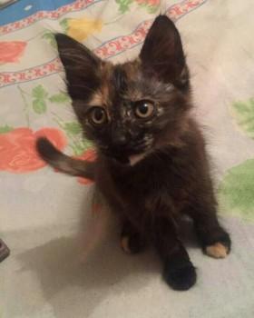 Невероятный котенок