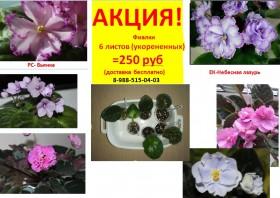 Фиалки - Цветы. Продаю набор листов (укорененные)