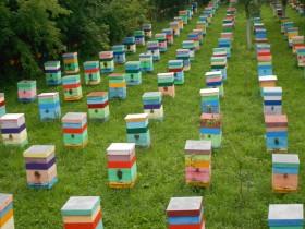 Самые ранние пчелопакеты в Волгограде