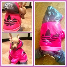 Одежда для маленьких собачек..