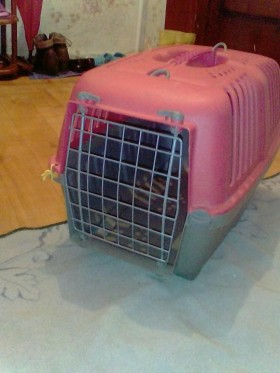 Переноска для кошки!
