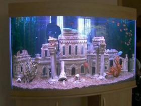 Оформление, обслуживание пресноводных аквариумов