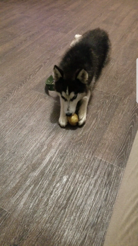 Потерялась собака!