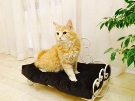 Кованные диванчики для животных