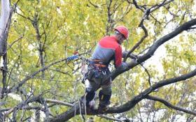 Расчистка участка - обрезка деревьев