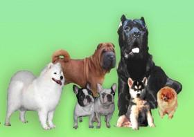 Наши четвероногие друзья, это наши собаки!!!