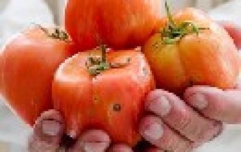 Круглые дырки на зеленых помидорах
