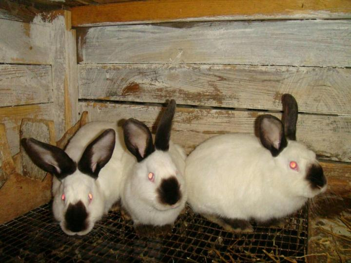 Фото кроликов в домашних условиях