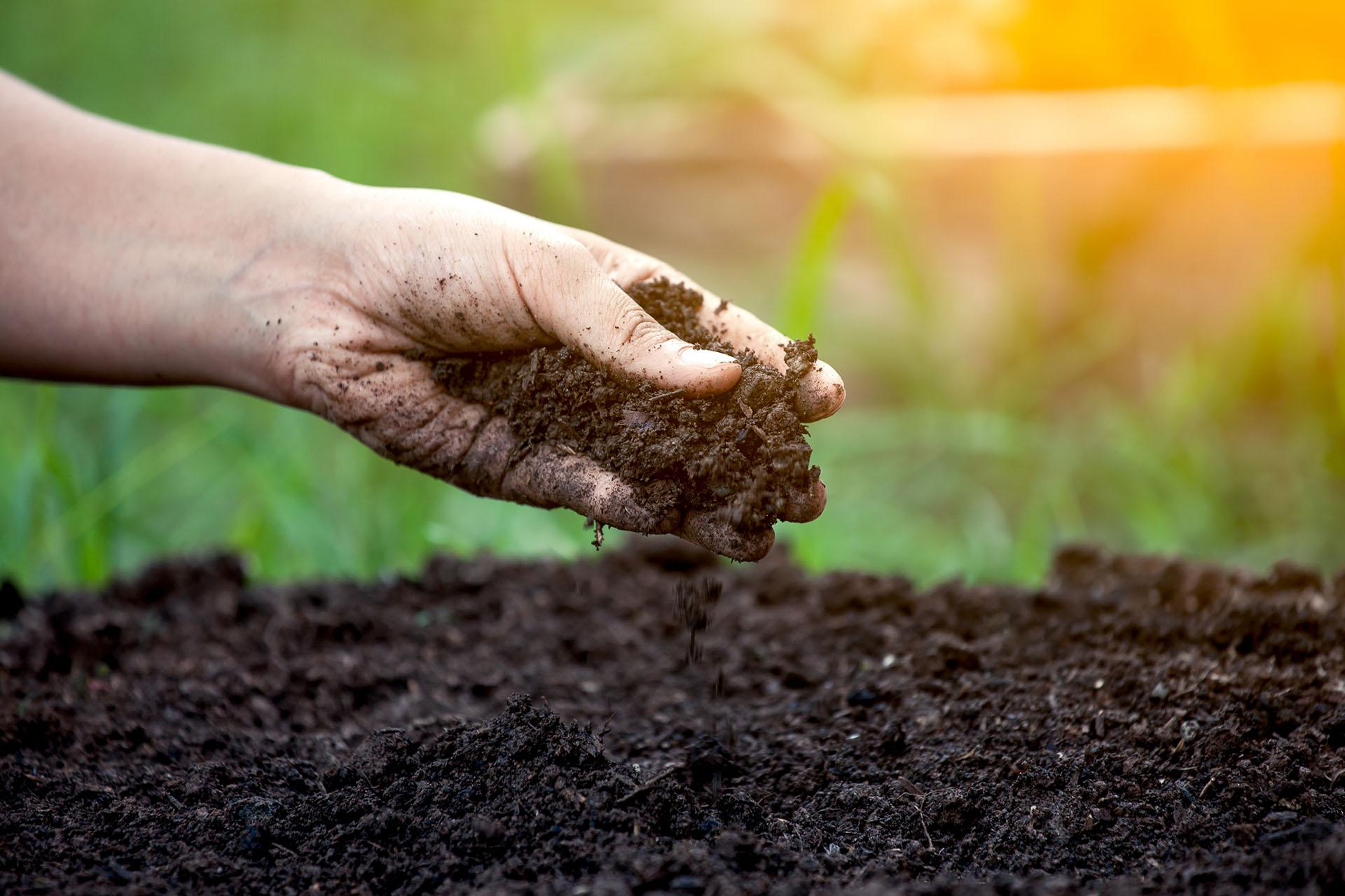 субстраты для выращивания каннабиса, земля